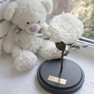 Роза под стеклом белая пышный бутон