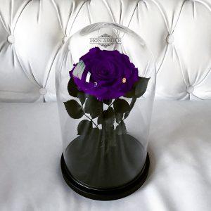 Роза под стеклом фиолетовая