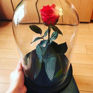 Роза под стеклом красная интерьерная