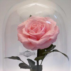 Роза под стеклом вечная