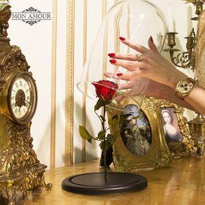 Красная роза под стеклом