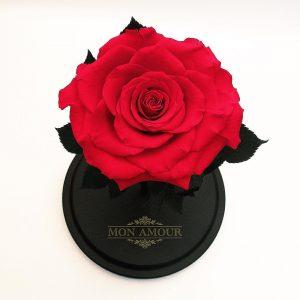 Роза в колбе Premium красная большой бутон