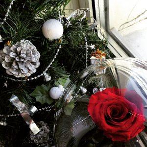 Красная роза праздничная под стеклом