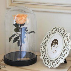Роза в колбе Queen персиковая