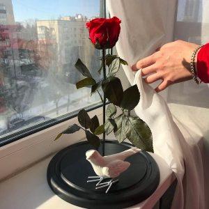 Красная роза под стеклом вечная
