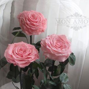 Роза в колбе Premium бледнорозовая