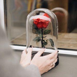 Алая роза под стеклом