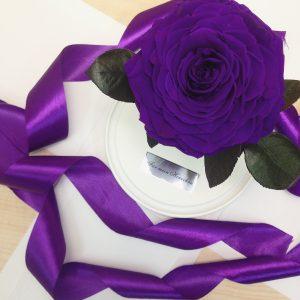 Роза под стеклом фиолетовая на белой подставке