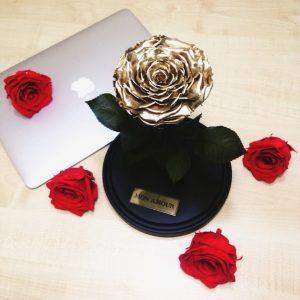 Роза под стеклом Gold King