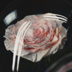 Роза под стеклом розовая инкрустация